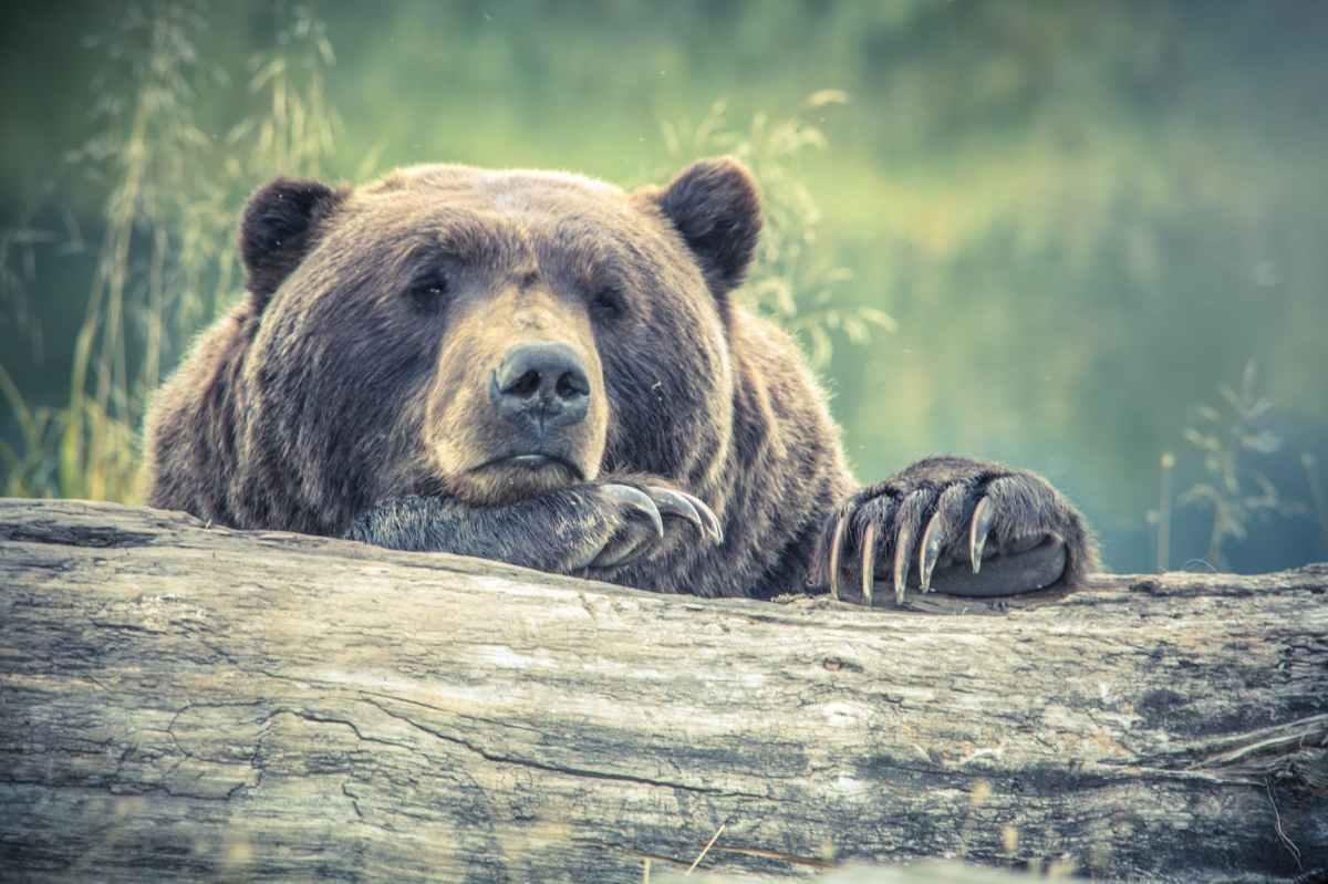 14 Pfund Corona! Stressmanagement für Dich und andereBären
